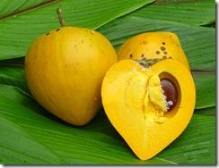 eggfruit.-1jpg
